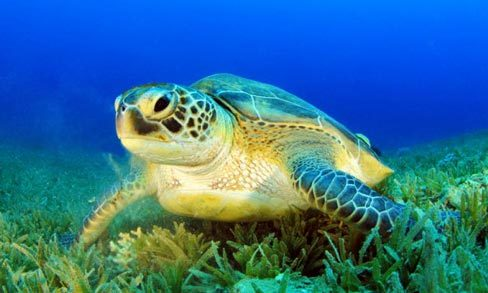 How to get the most out of encounters with sea turtles