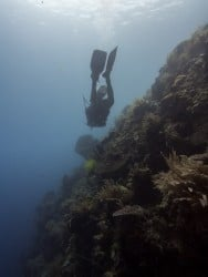 How to dive on walls - Two Fish Divers