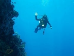 Wall diving with Two Fish Divers