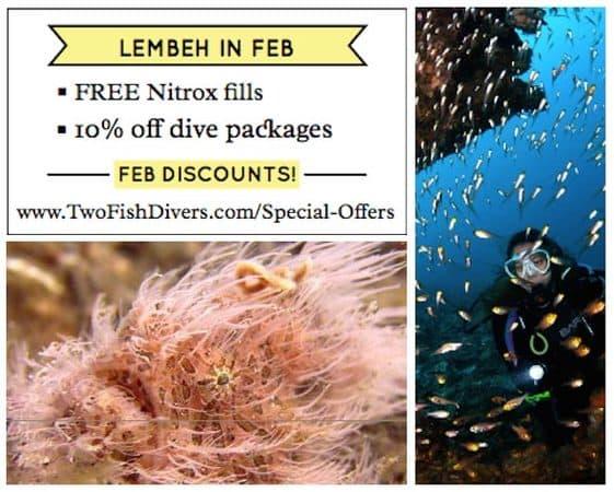 Lembeh-discount-feb-2016-v3-590px