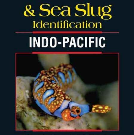 How knowledgeable is your Lembeh dive guide?