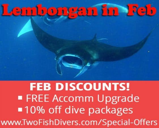 We are offering discounts for Diving Lembongan in Feb