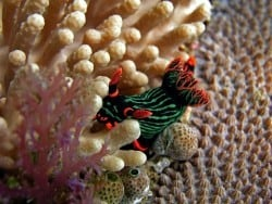 Underwater in Senggigi, Lombok