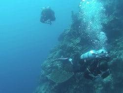 Two Fish Divers Bunaken day trip