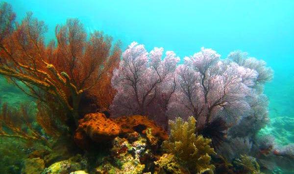 Amed Diving Trip Bunutan