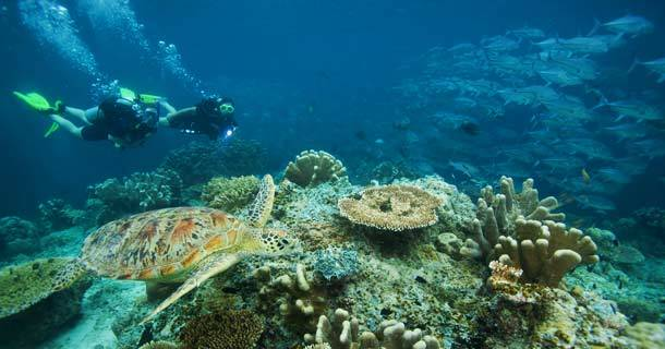 diving-gili-air-6