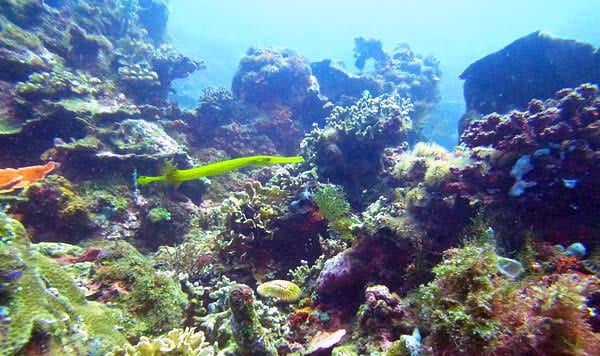 Amed Diving Trip TP