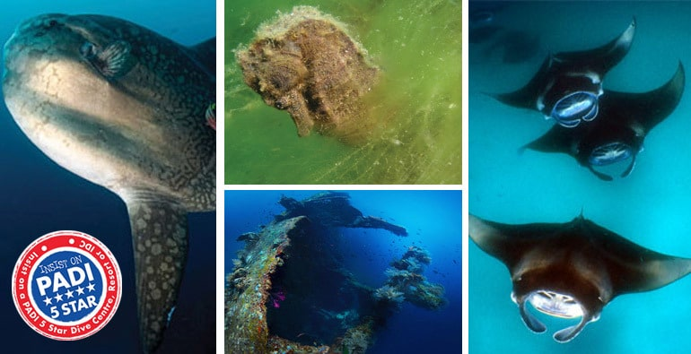 PADI Dive Courses in Amed
