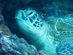 Diving courses in Bunaken