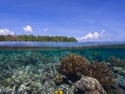 Bunaken resort update and info about national park!