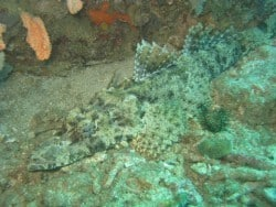 Crocodile Fish in North Lombok