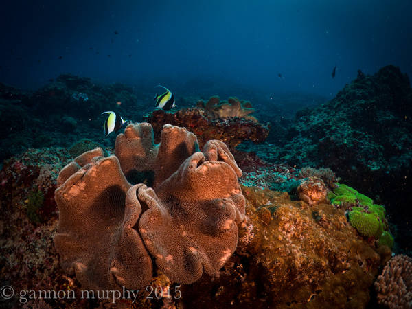 Reef Checks in Lembongan