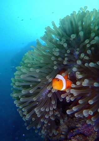 Finding Nemo in Lembongan