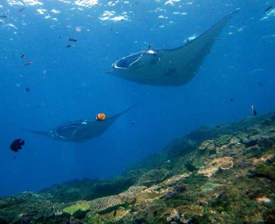Clear Waters and Friendly Mantas in Lembongan