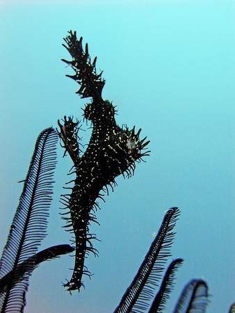 pipefish and feather stars