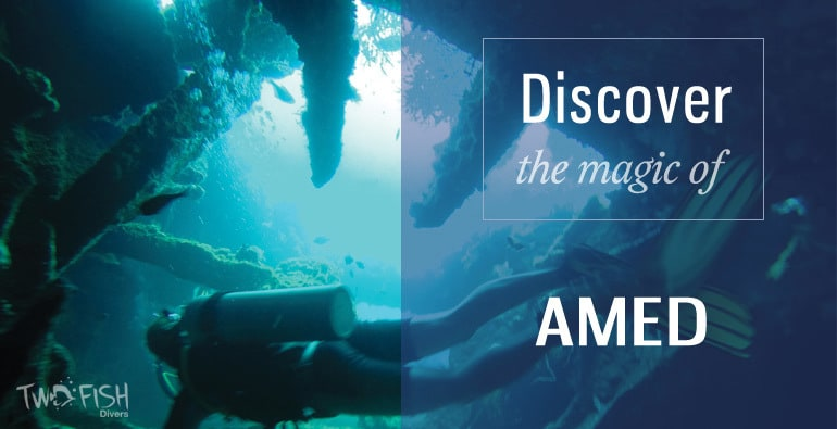 discover amed