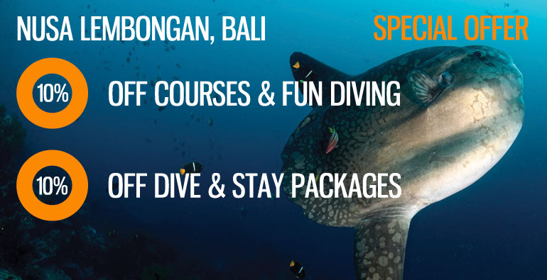 Nusa-Lembongan-10-off-dive-stay-courses-fun