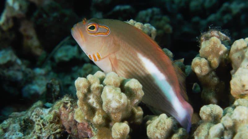 amazing dives bunaken