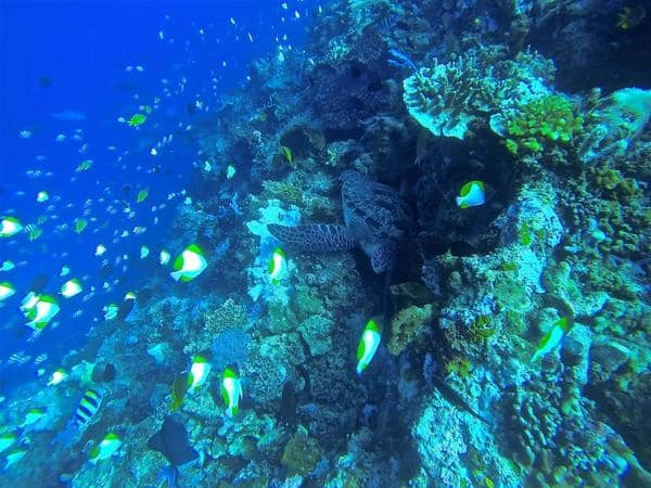 Divemaster Trainee Joe - Bunaken