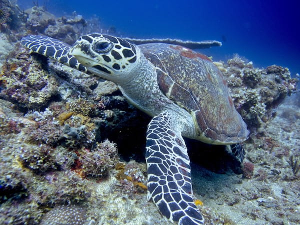 Turtle-Amed-Bali