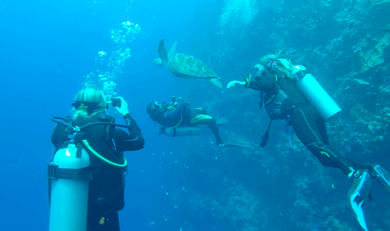Divemaster trainee Ian with turtle