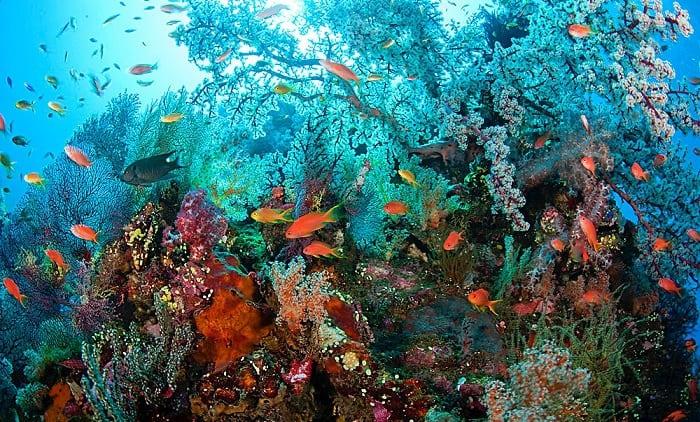 US Liberty Shipwreck Tulamben