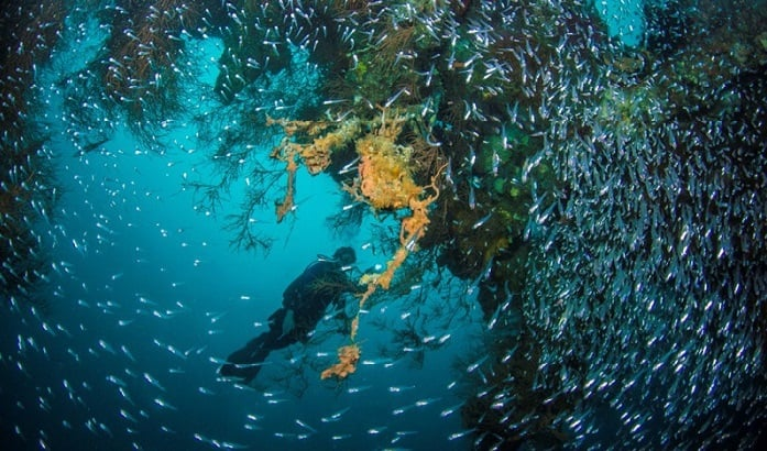 Dive Amed