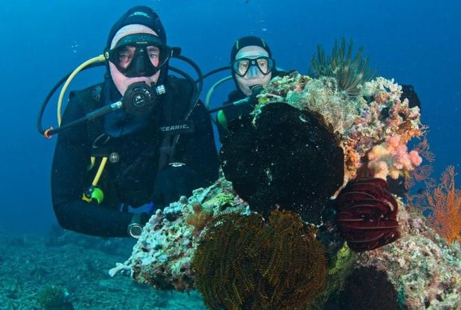 Diverse aquatic life