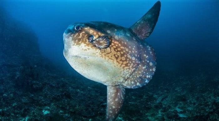 Mola diving Bali