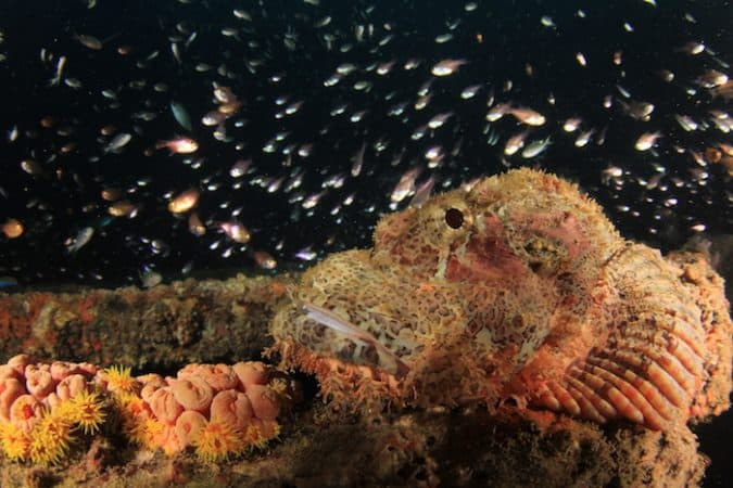 Lembeh Muck Diving