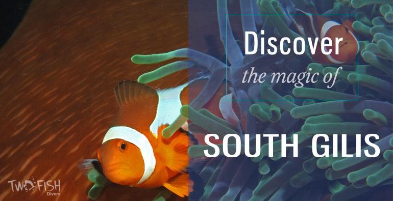 discover south gilis