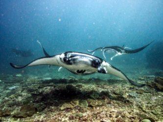Underwater photo editing for dummies
