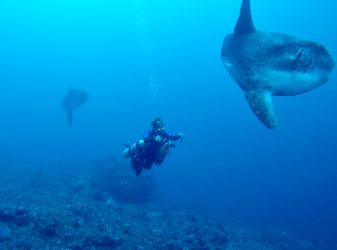 Mola Mola at Sekotong