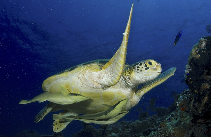 Marine Biology and Symbiosis - Unlikely Pairs Working Together