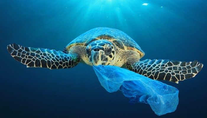 Plastic Bag Turtle