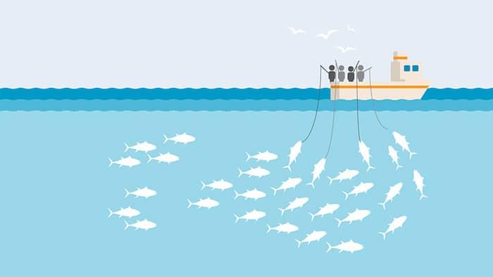 Sustainable fishing