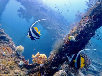 Open Water Divers Courses | Two Fish Divers