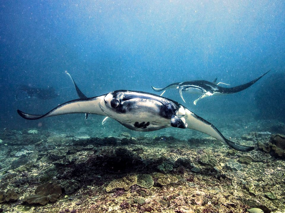 Best divemaster course in Bali