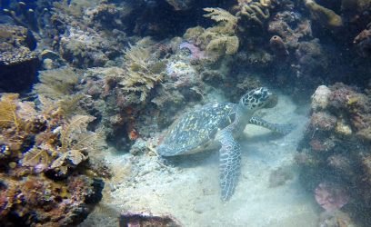 Turtle in Amed | Two Fish Divers