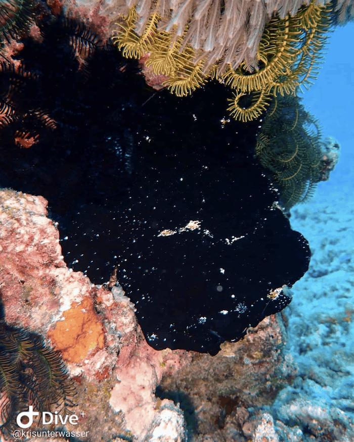 Frogfish Gili Air