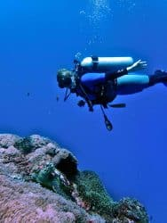 Diver looking at a turtle