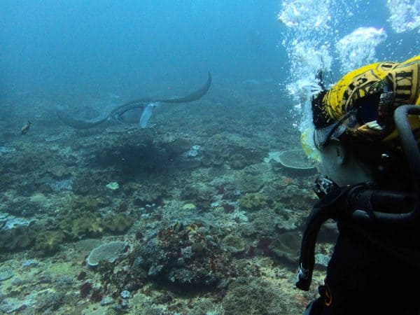 Diver with Manta ray in Bali