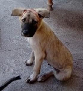 Snap puppy