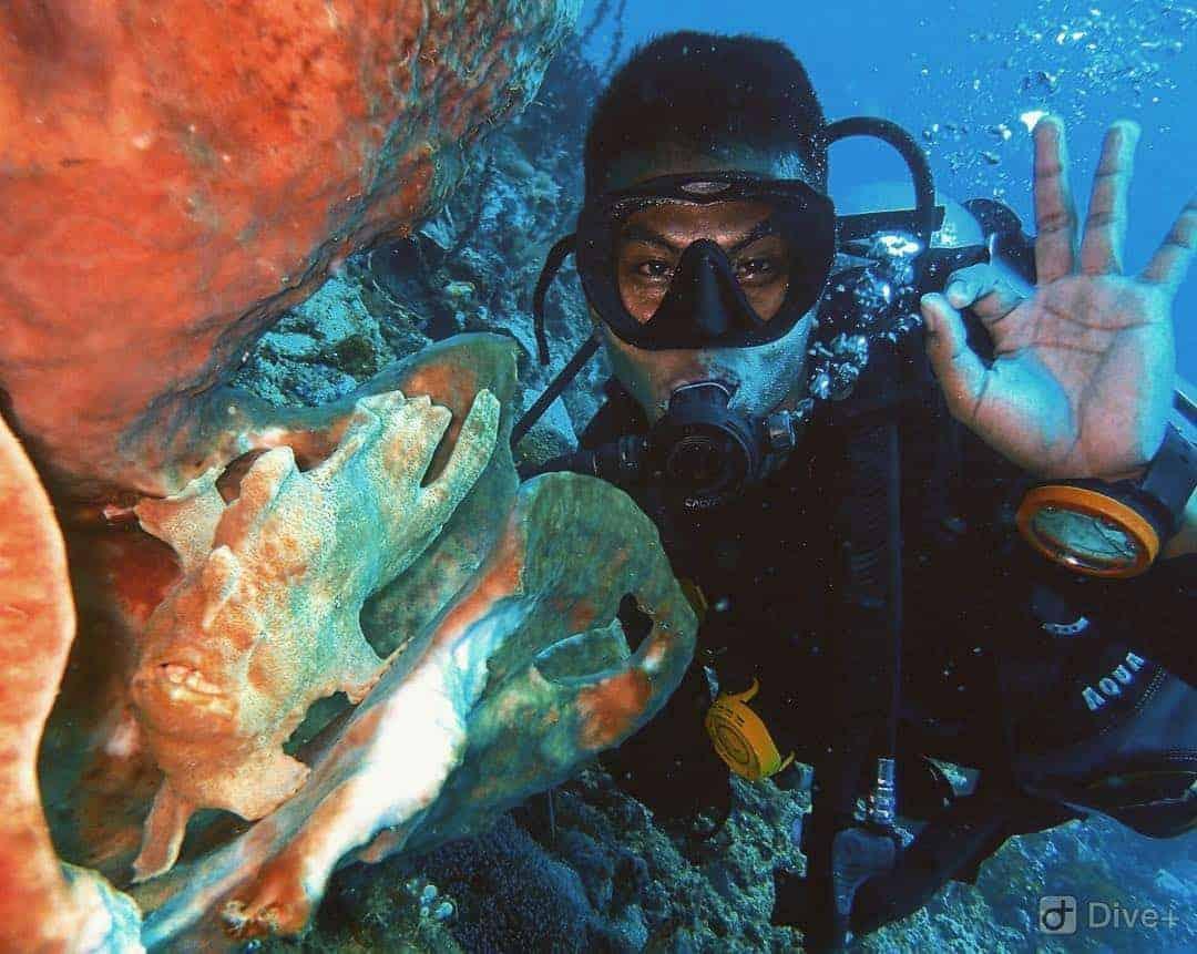 Diving Lembeh